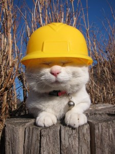 cat-in-construction-gear